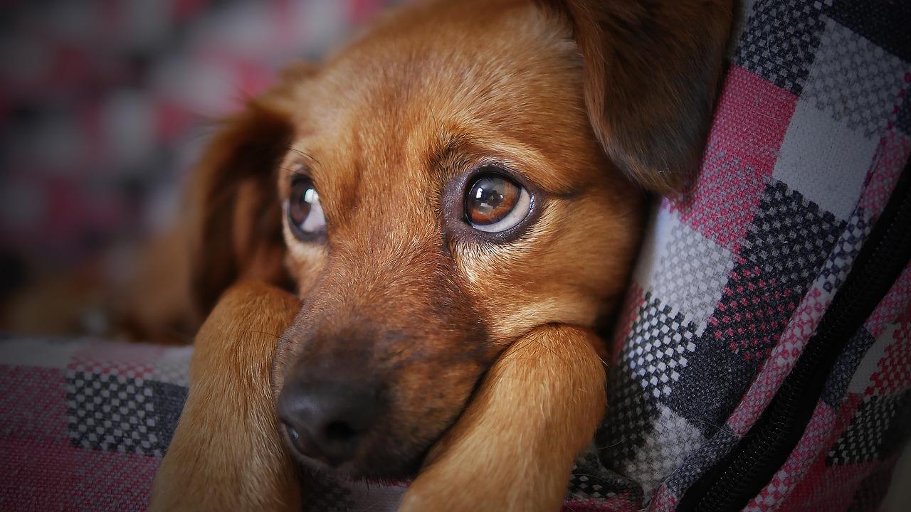 Milyen kutya jutalomfalat árakkal kell számolnom?