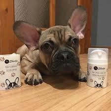 Kutyakozmetikumok fajtára szabva