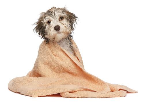 Orrápoló az egészséges kutyanózikért